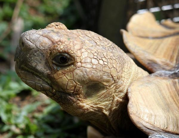 Do turtles have ears