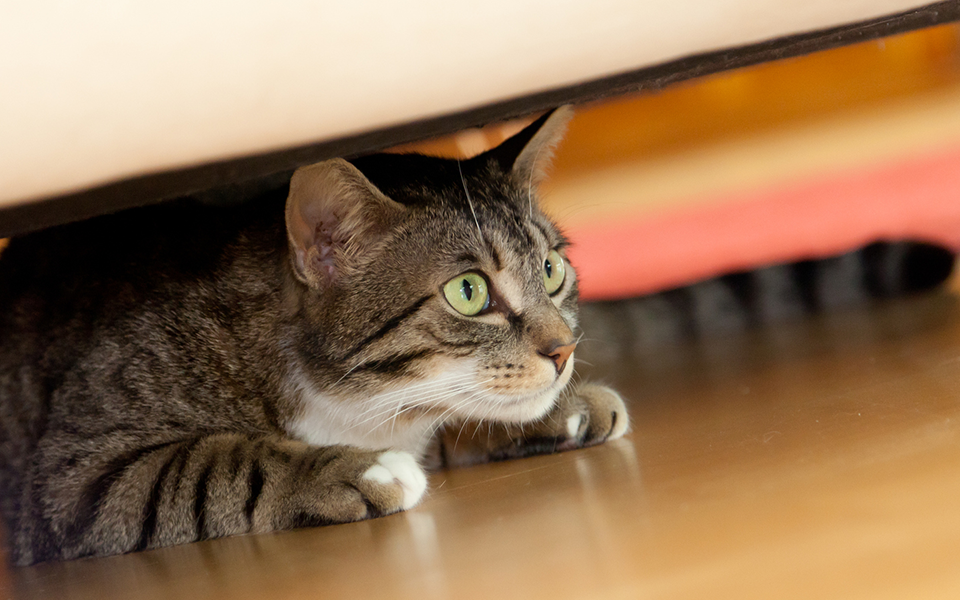 how to get a scared cat out of hiding